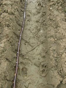 Assorted tracks in the mud