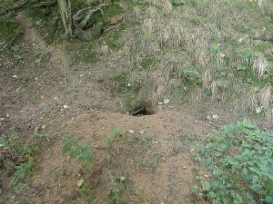 The new badger sett