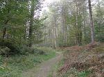 newborough-forest