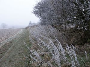 Frosty fields