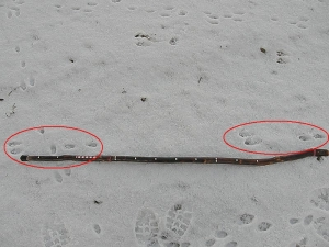 Bounding rabbit tracks
