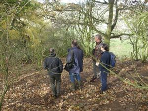 Monitoring Badger Setts near Ampthill