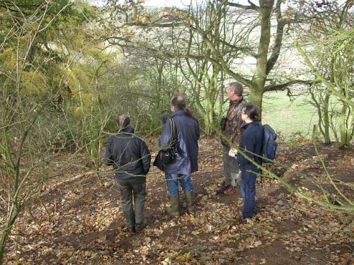 Monitoring Badger Setts near Ampthill