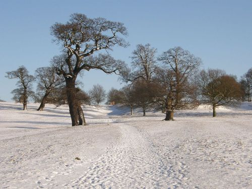 Woburn Deer Park in Snow