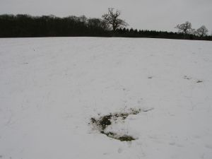 Badger Snuffle Hole in Snow