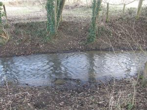 Brook crossed by a badger path
