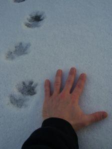 Mystery Snow Tracks