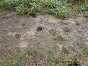 Badger Latrine Site