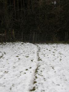 Badger Path through Fence