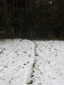 Badger Path through Fence