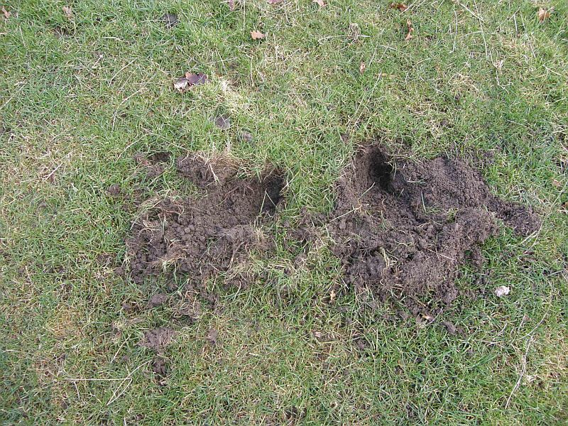 How To Recognise A Badger Sett Tales From The Wood The