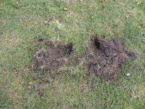 Badger Snuffle Holes