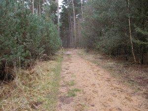 Aspley Woods