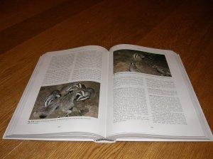 Mammals of the British Isles Handbook - Badgers