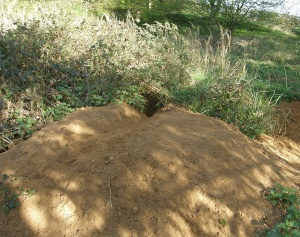 Spoil heap outside badger sett