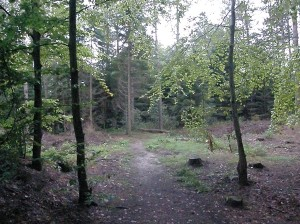 Newborough Forest in Anglesey at daybreak
