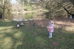 Feeding the Ducks at Woburn