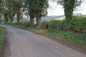 Cheshire Badger Sett by the Road