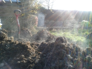 Steaming manure on the vegetable garden