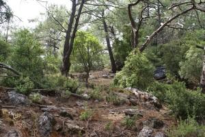 The landscape on Adakoy