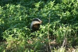 Alert Badger